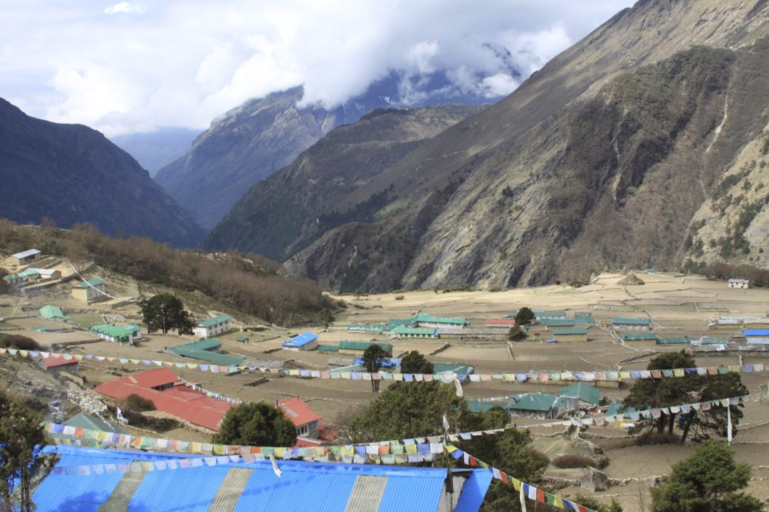 One Day, One Tree; Help Nepal and Help the Planet